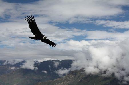 Viechtach - El Condor Pasa