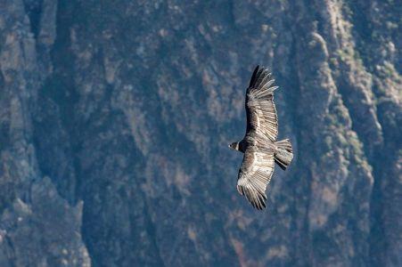 Viechtach- El Condor Pasa (Vorspiel)